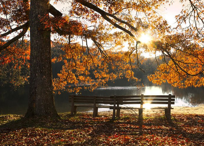 Appalachia Greeting Card featuring the photograph Autumn Beauty by Debra and Dave Vanderlaan
