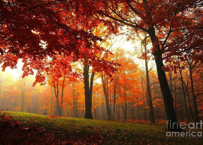 Autumn Greeting Card featuring the photograph Autumn Canopy by Terri Gostola