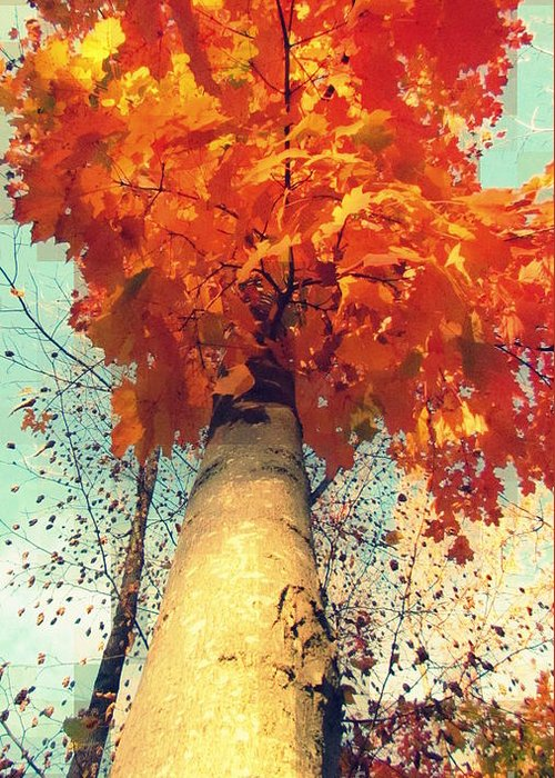 Blue Greeting Card featuring the photograph Autumn Fantasy 1 by France Laliberte