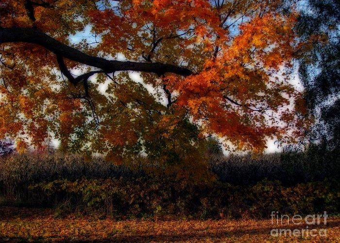 Autumn In The Country Greeting Card featuring the photograph Autumn In The Country by Inspired Nature Photography Fine Art Photography