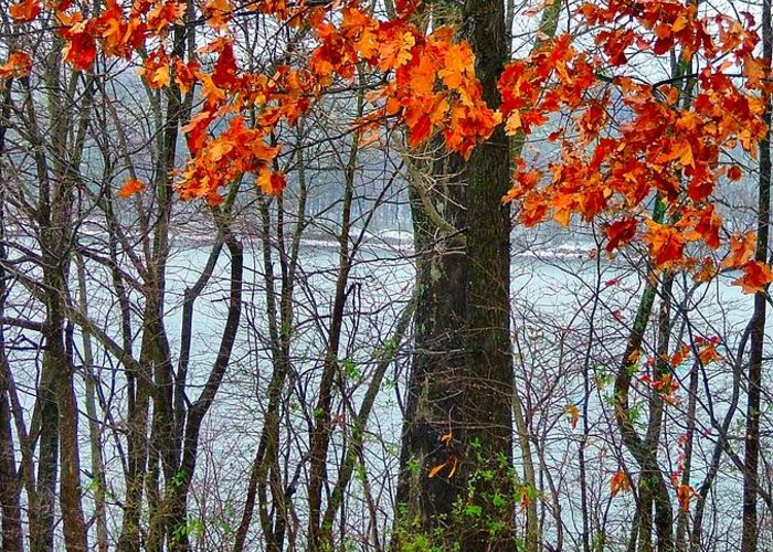 Autumn Leaves Greeting Card featuring the photograph Autumn In Winter by Julie Dant