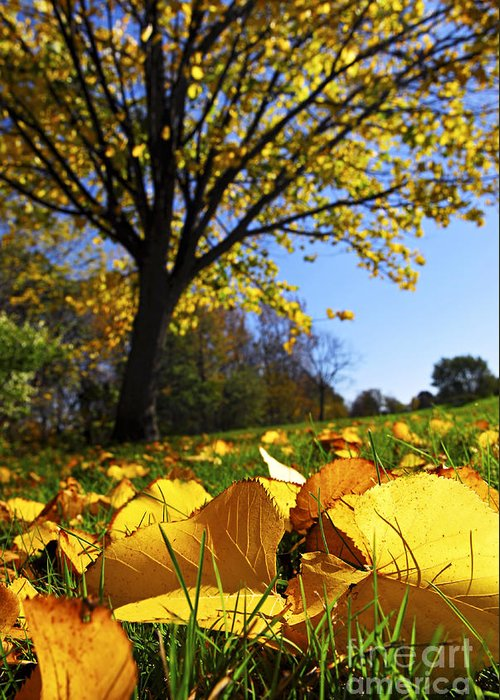 Autumn Greeting Card featuring the photograph Autumn Landscape by Elena Elisseeva