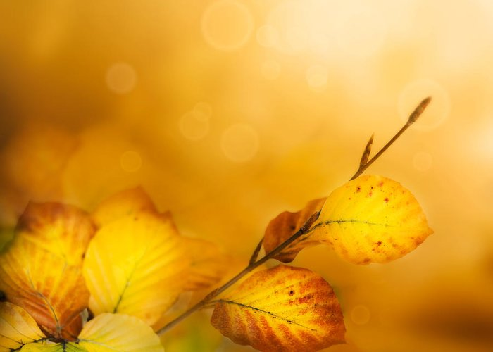 Abstract Greeting Card featuring the photograph Autumn Leaves by Mythja Photography