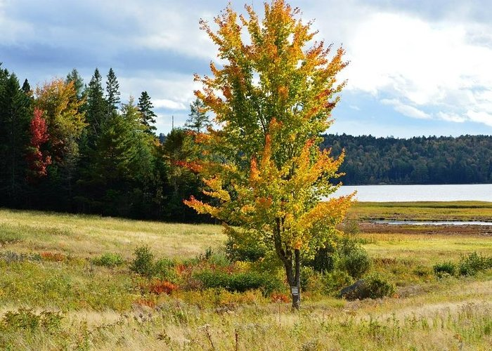 Autumn Greeting Card featuring the photograph Autumn Shores Of Maine by Lena Hatch