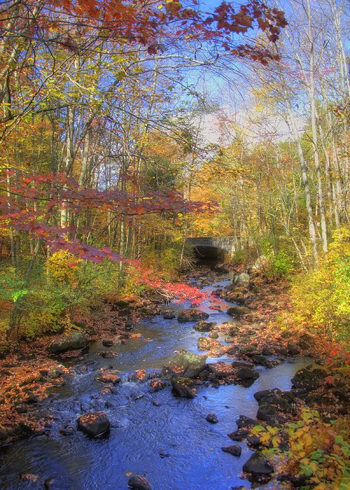 New England Autumn Scenes Greeting Card featuring the photograph Autumn Woods by Joann Vitali