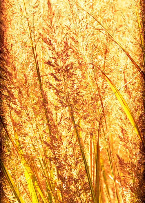 Grass Greeting Card featuring the photograph Autumns Passion by Bob Orsillo