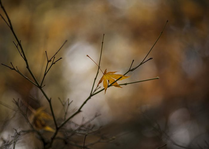 Fall Colors Greeting Card featuring the photograph Autumns Solitude by Mike Reid