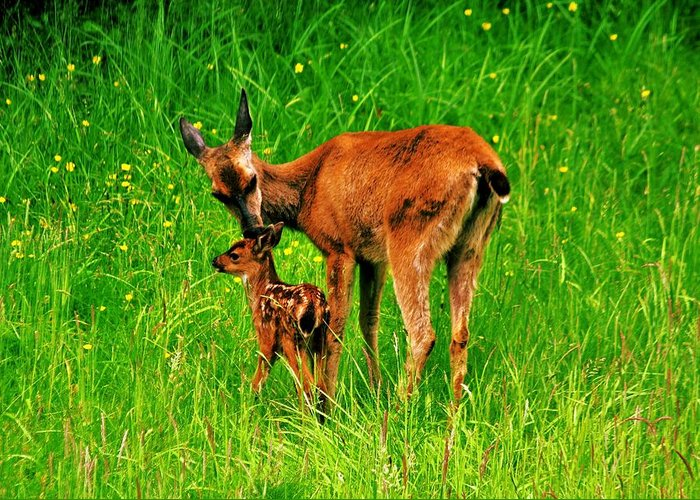 Deer Greeting Card featuring the photograph Aww Mom by Benjamin Yeager