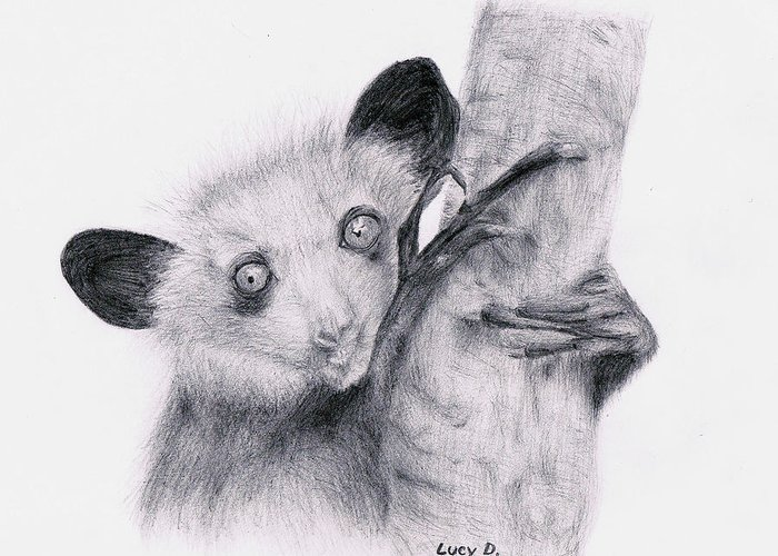 Wildlife Greeting Card featuring the drawing Aye-aye by Lucy D