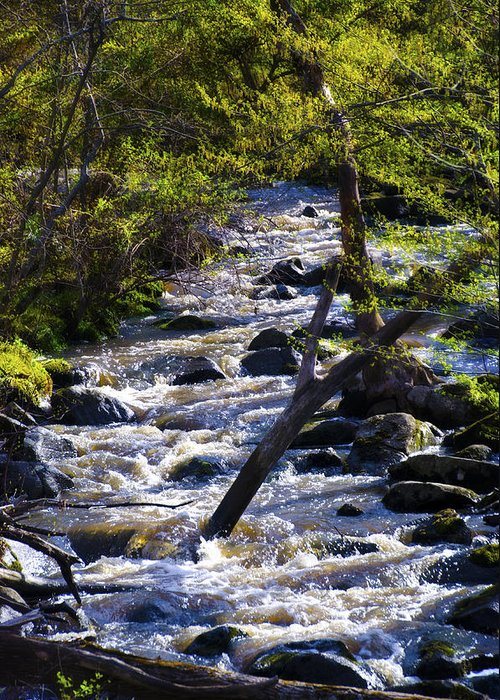 Babbling Greeting Card featuring the photograph Babbling Brook by Bill Cannon