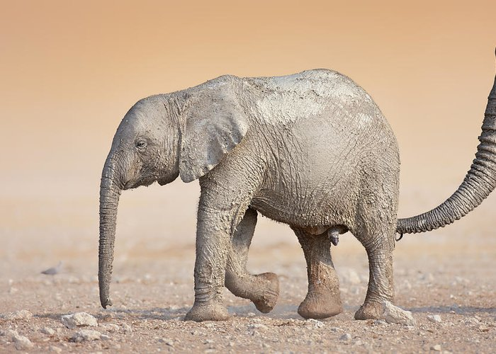 Wild Greeting Card featuring the photograph Baby Elephant by Johan Swanepoel