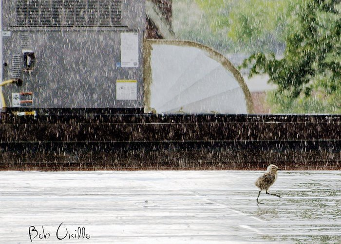 Animal Greeting Card featuring the photograph Baby Seagull Running In The Rain by Bob Orsillo