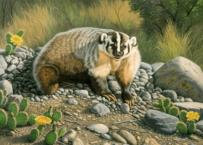 Wildlife Greeting Card featuring the painting Badger  by Paul Krapf