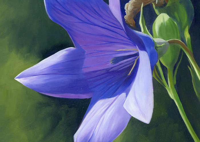 Flower Greeting Card featuring the painting Balloon Flower by Alecia Underhill
