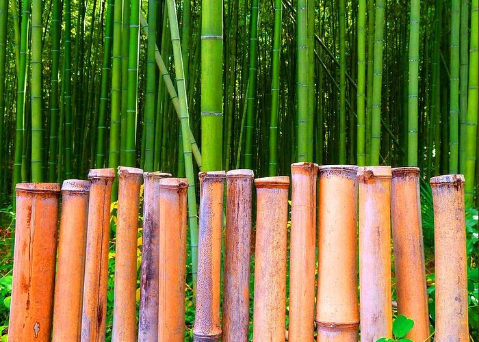 Julia Tanner Greeting Card featuring the photograph Bamboo Fence by Julia Ivanovna Willhite