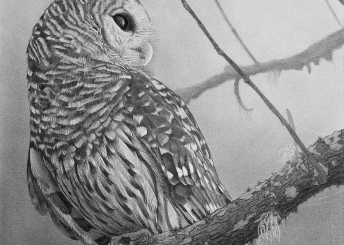Graphite Drawing Greeting Card featuring the drawing Barred Owl by Tim Dangaran