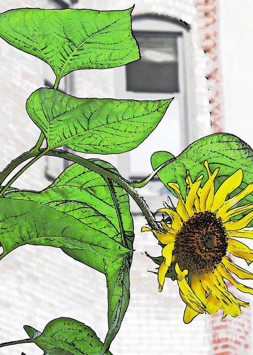 Barrio Sunflower Greeting Card featuring the photograph Barrio Sunflower by Sarah Loft