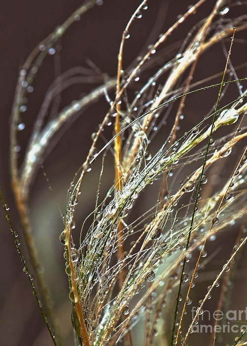 Sea Grass Greeting Card featuring the photograph Beads Of Water On Sea Grass by Artist and Photographer Laura Wrede