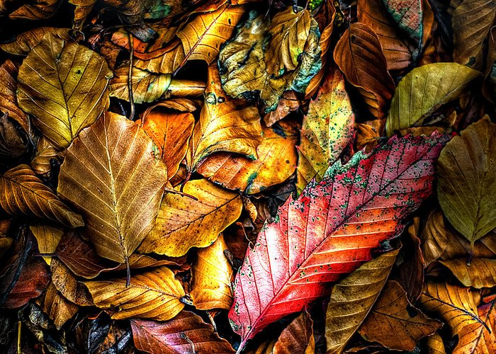 Autumn Greeting Card featuring the photograph Beautiful Fall Color by Meirion Matthias