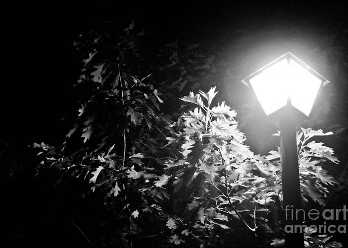 Art Greeting Card featuring the photograph Beautiful Lamp Light In The Dark by Fatemeh Azadbakht