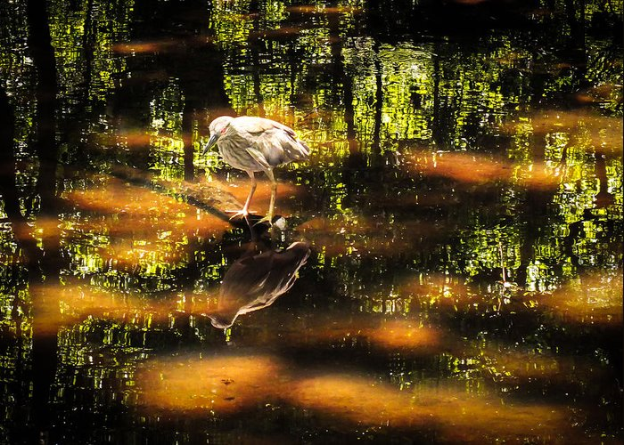Estuaries Greeting Card featuring the photograph Beauty Of The Bog by Karen Wiles