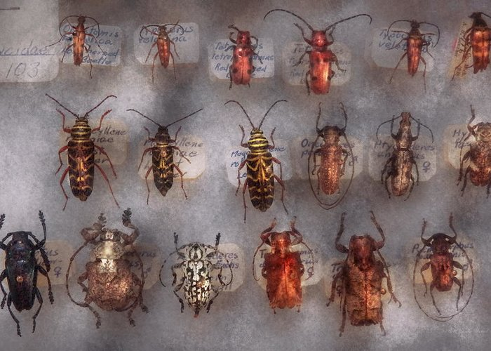 Bugs Greeting Card featuring the photograph Beetles - The Usual Suspects by Mike Savad