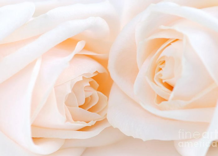 Rose Greeting Card featuring the photograph Beige Roses by Elena Elisseeva