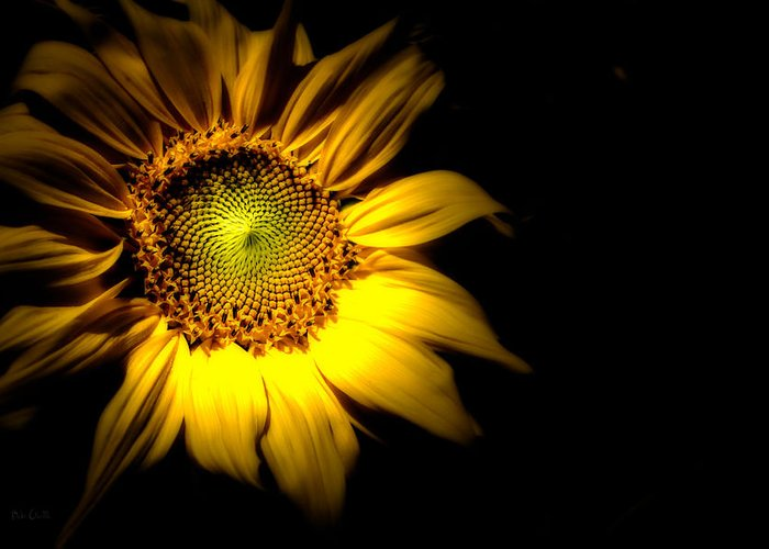 Sunflower Greeting Card featuring the photograph Between Here And There by Bob Orsillo