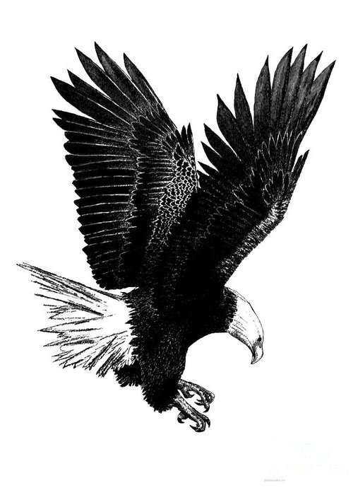 Original Greeting Card featuring the drawing Black And White With Pen And Ink Drawing Of American Bald Eagle by Mario Perez
