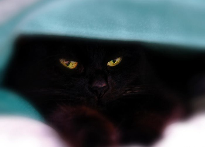Cat Greeting Card featuring the photograph Black Cat Secrets by Bob Orsillo
