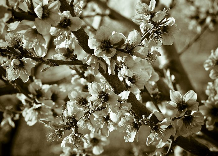 Blossoms Greeting Card featuring the photograph Blossoms by Frank Tschakert