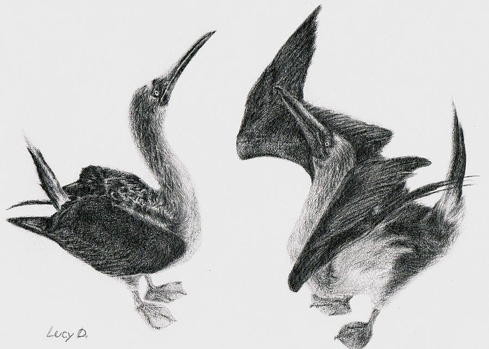 Animals Greeting Card featuring the drawing Blue-footed Boobies by Lucy D