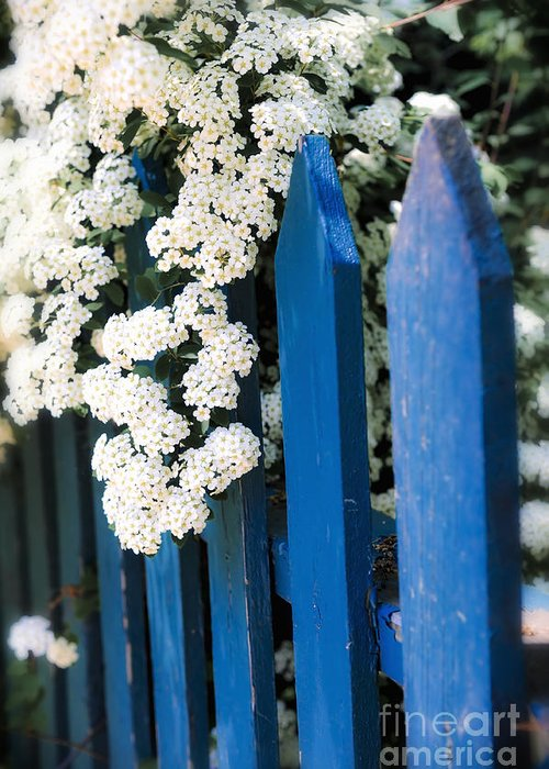 Fence Greeting Card featuring the photograph Blue Garden Fence With White Flowers by Elena Elisseeva