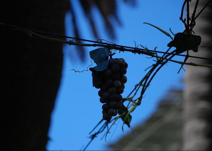 Grappes Greeting Card featuring the photograph Blue Grapes by Dany Lison