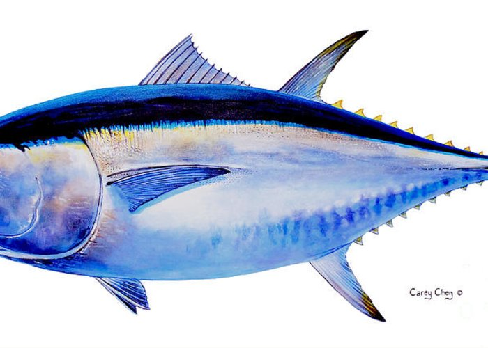 Bluefin Greeting Card featuring the painting Bluefin Tuna by Carey Chen