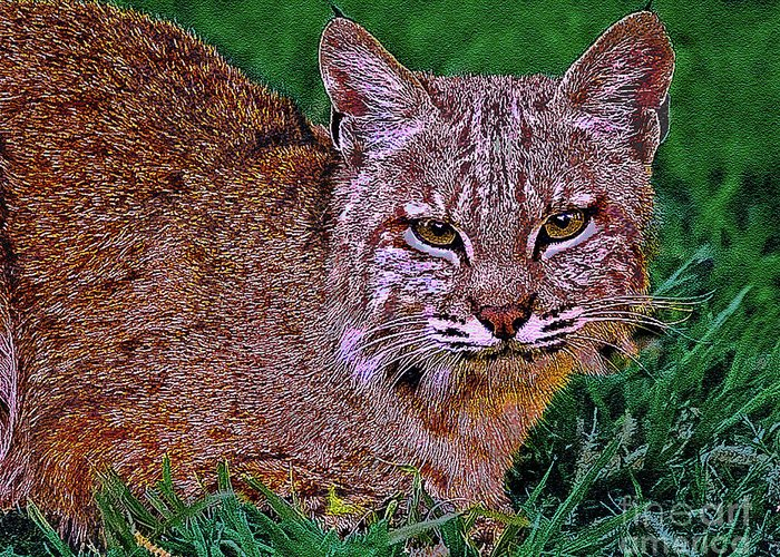 Animal Greeting Card featuring the digital art Bobcat Sedona Wilderness by Bob and Nadine Johnston
