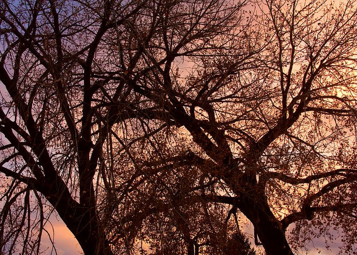 Tree Greeting Card featuring the photograph Branching Out At Sunset by James BO Insogna