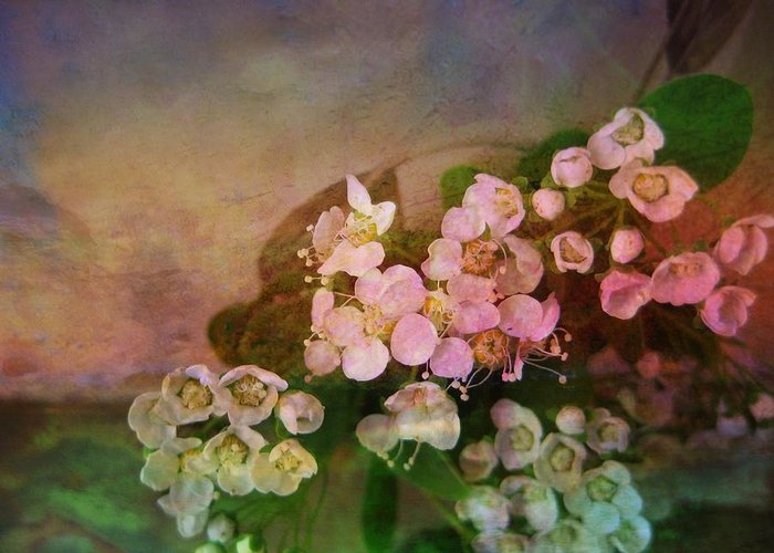 Spirea Greeting Card featuring the photograph Bridal Memories by Shirley Sirois