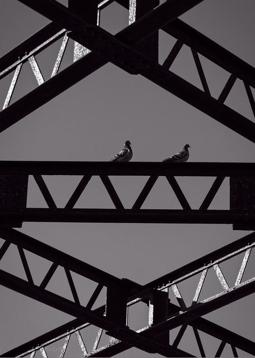 Pigeon Greeting Card featuring the photograph Bridge Abstract by Bob Orsillo