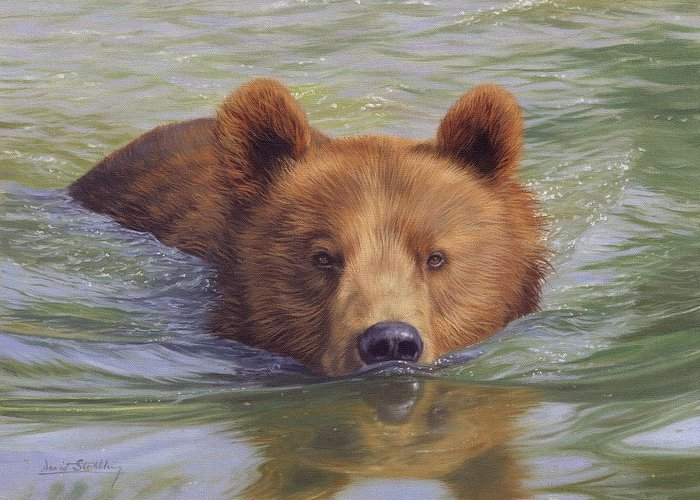 Bear Greeting Card featuring the painting Brown Bear Painting by David Stribbling