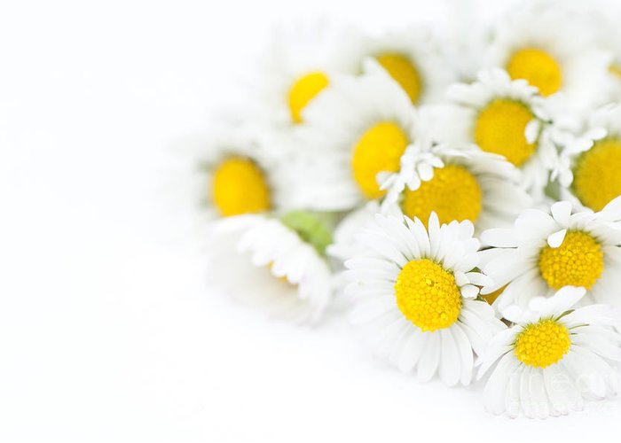 Floral Greeting Card featuring the photograph Bunch Of Daisies by Anne Gilbert