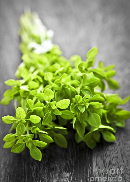 Oregano Greeting Card featuring the photograph Bunch Of Fresh Oregano by Elena Elisseeva