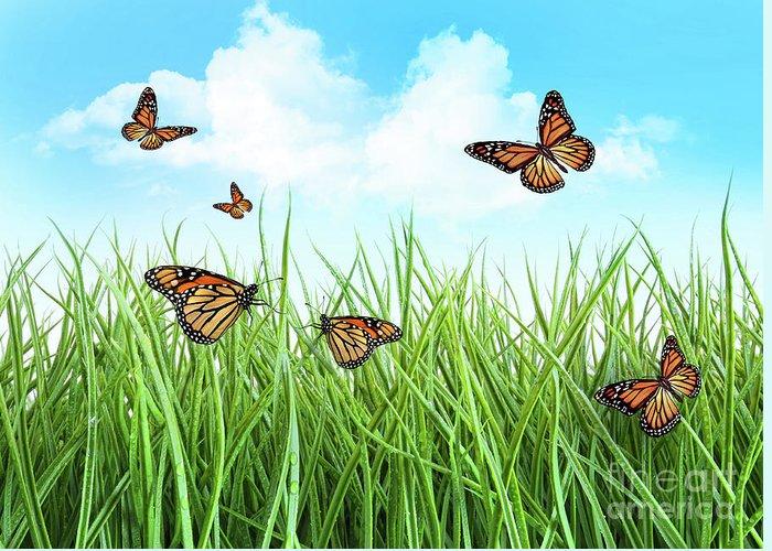 Backyard Greeting Card featuring the photograph Butterflies In Tall Wet Grass by Sandra Cunningham