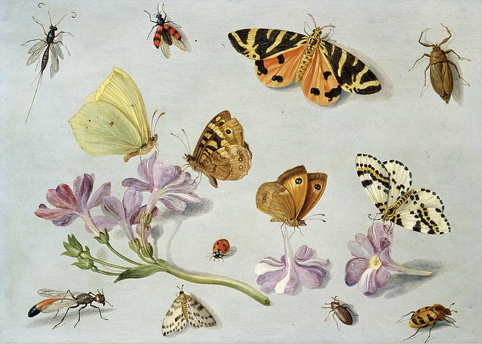 Still Life Greeting Card featuring the painting Butterflies by Jan Van Kessel