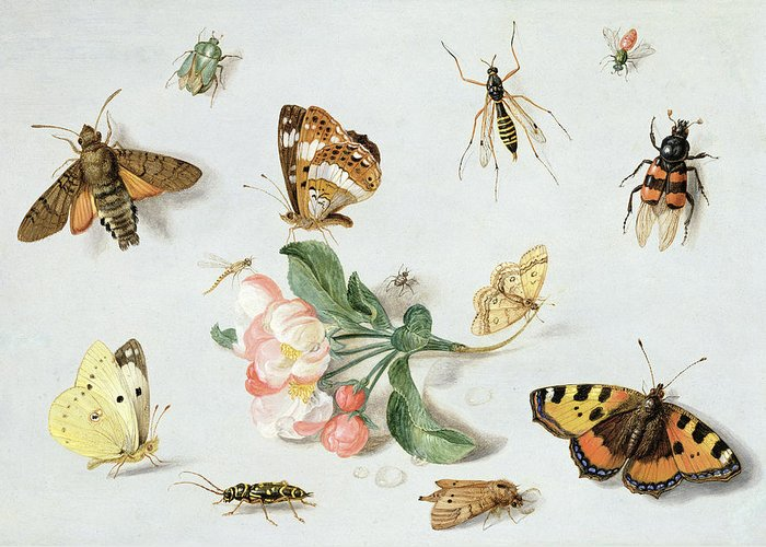 Butterfly Greeting Card featuring the painting Butterflies Moths And Other Insects With A Sprig Of Apple Blossom by Jan Van Kessel