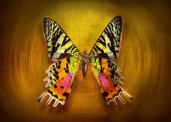 Butterfly Greeting Card featuring the photograph Butterfly - Butterfly Of Happiness by Mike Savad
