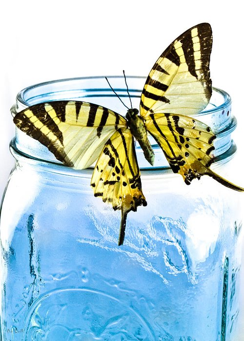 Nature Greeting Card featuring the photograph Butterfly On A Blue Jar by Bob Orsillo