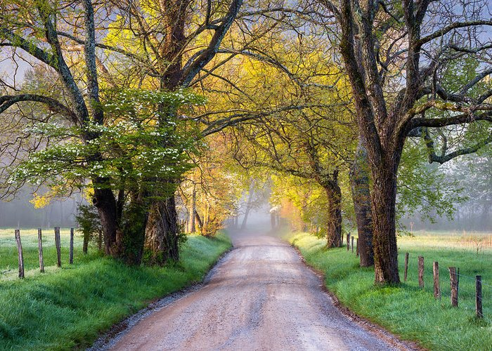 Cades Cove Greeting Card featuring the photograph Cades Cove Great Smoky Mountains National Park - Sparks Lane by Dave Allen