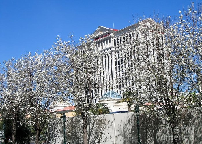 Palace Greeting Card featuring the photograph Caesar's Palace by Sophie Vigneault