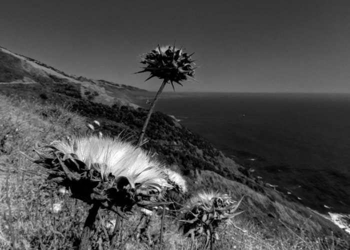 Big Sur California Greeting Card featuring the photograph California - Big Sur 002 by Lance Vaughn